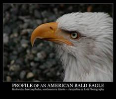 Profile of an American Eagle