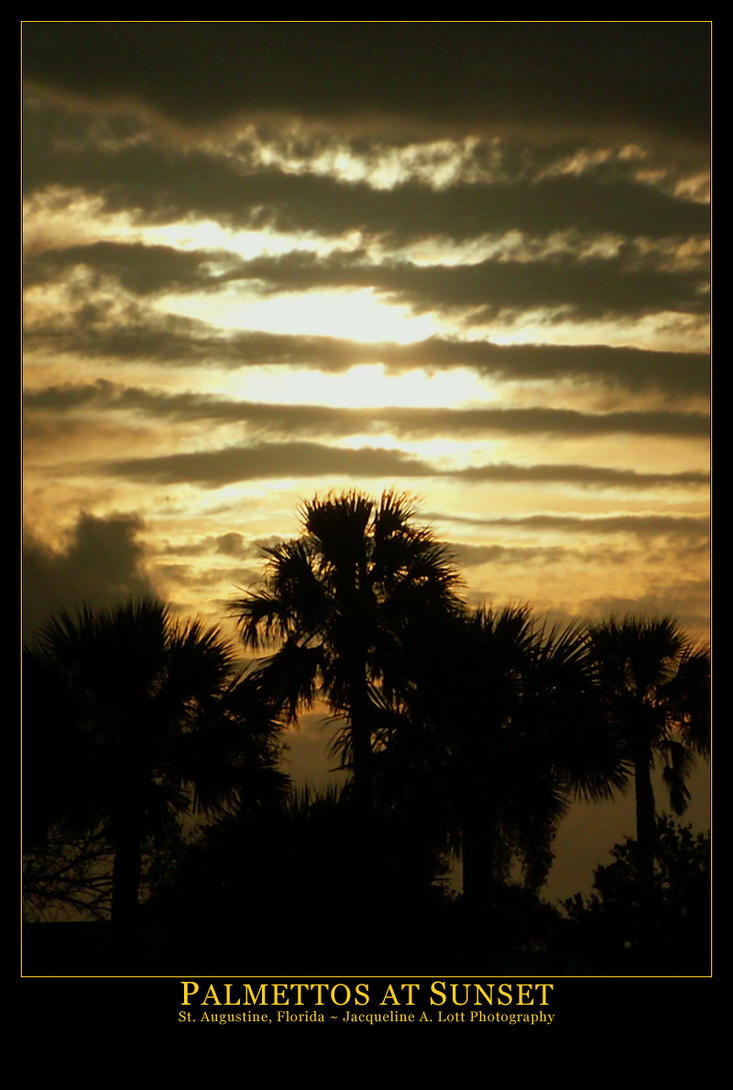 Palmettos at Sunset by Isquiesque