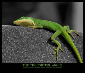 The Thoughtful Anole