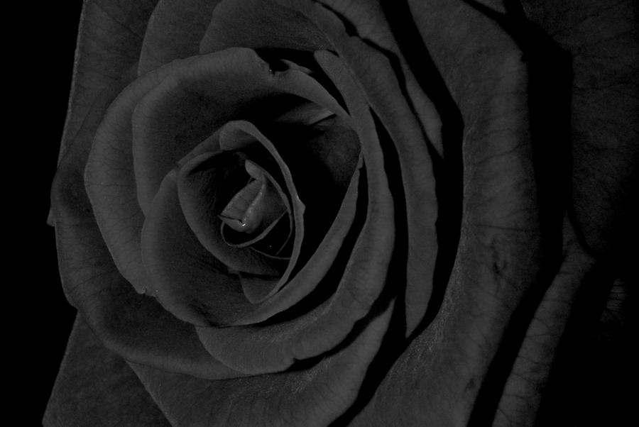 Black rose by mangowiczka on deviantart for How to make black roses