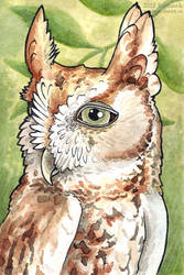 Screech Owl in the Ash Tree