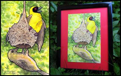 Building A New Home - Weaver Birds by sunhawk
