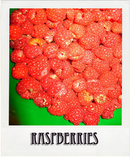 Raspberries Tour