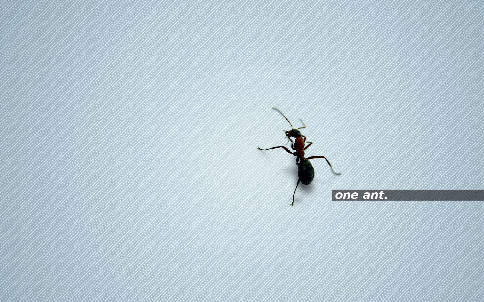one ant. brightblue