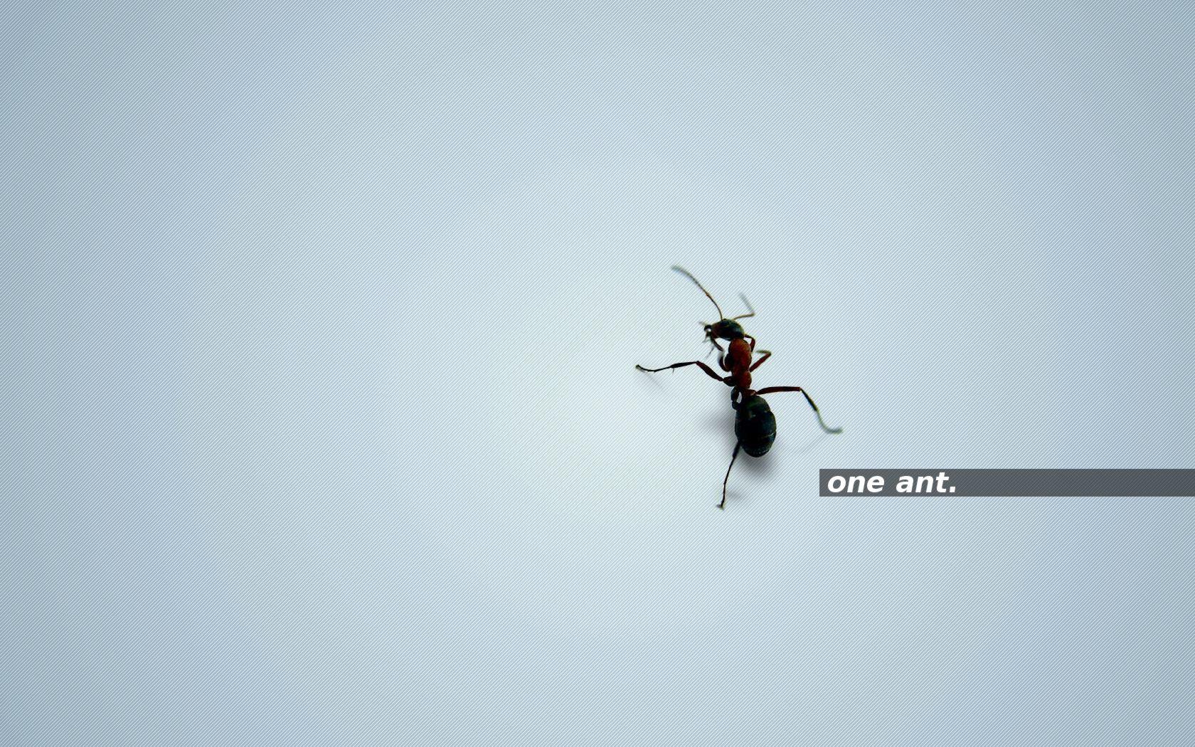 one ant. brightblue by 10r