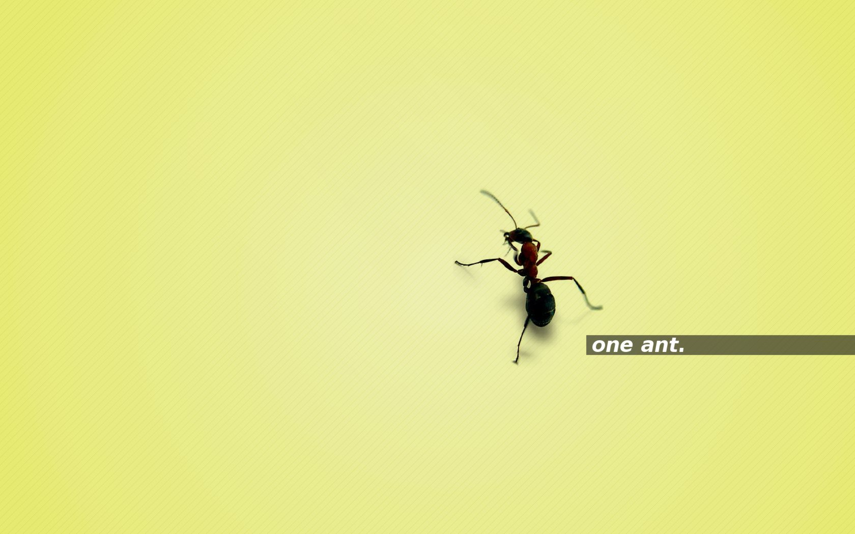 one ant. yellow