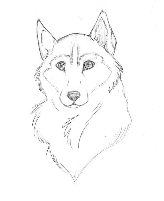 Line Drawing Of A Dog Face : The gallery for gt simple husky drawings