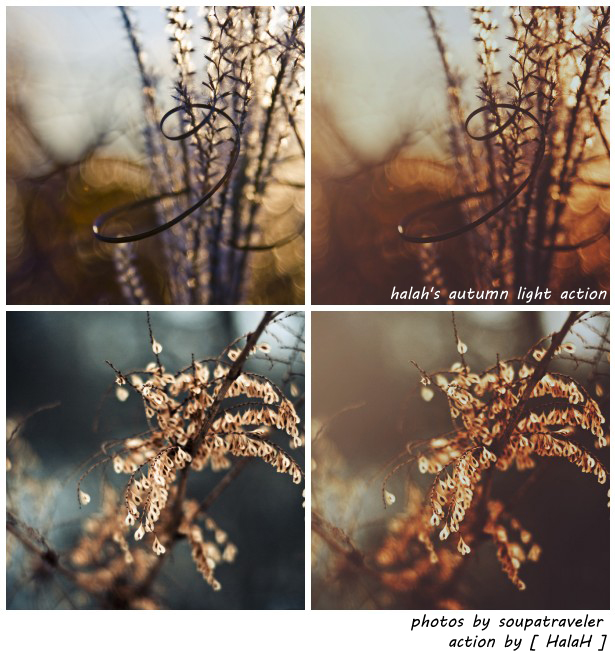 halah's autumn light action