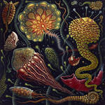 'JELLIES' by RSConnett