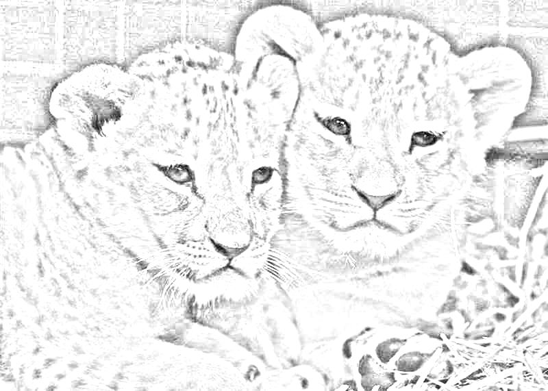 Cute Lion Cubs By EMERALD WOLF
