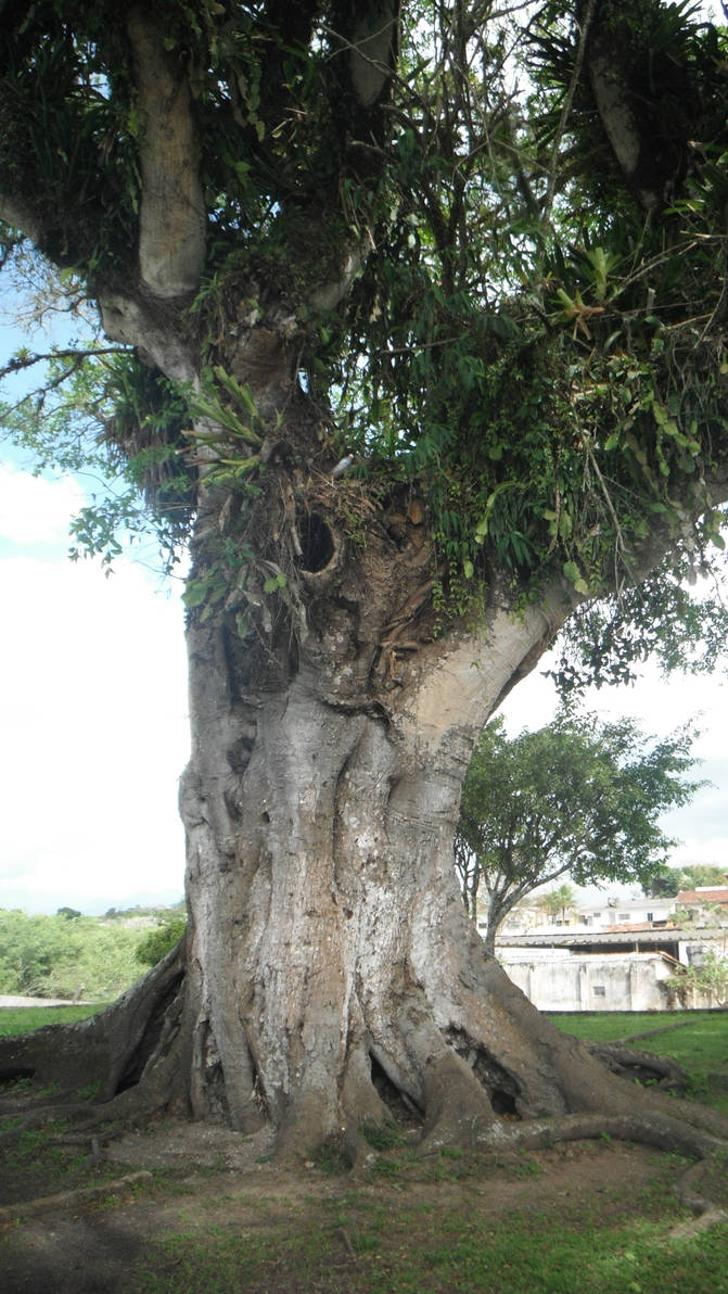 Big tree, big story