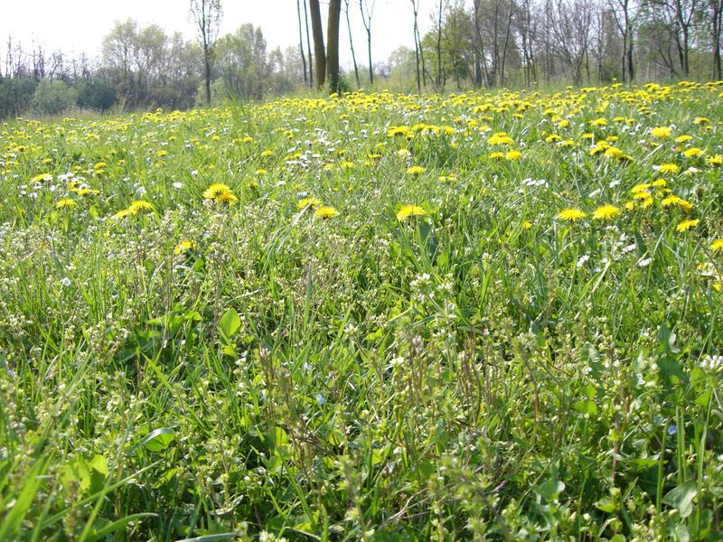 Flower Field Stock - 03 by VampireSybelle-Stock