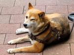 Dog Winks Back by hirolu