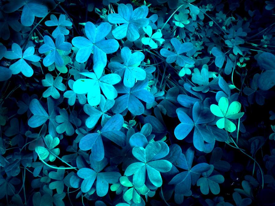CLOVER BLUE by hirolu on Devia...