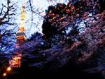 TOKYO TOWER TO SAKURA 2