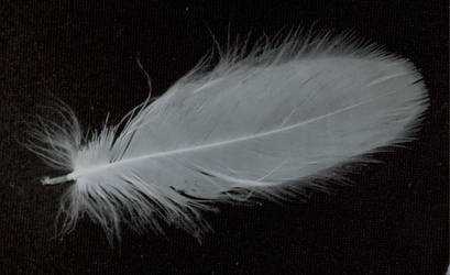 feather 12 by tash11-stock