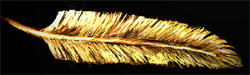 A Golden Feather