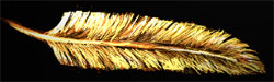 A Golden Feather by Silkenray