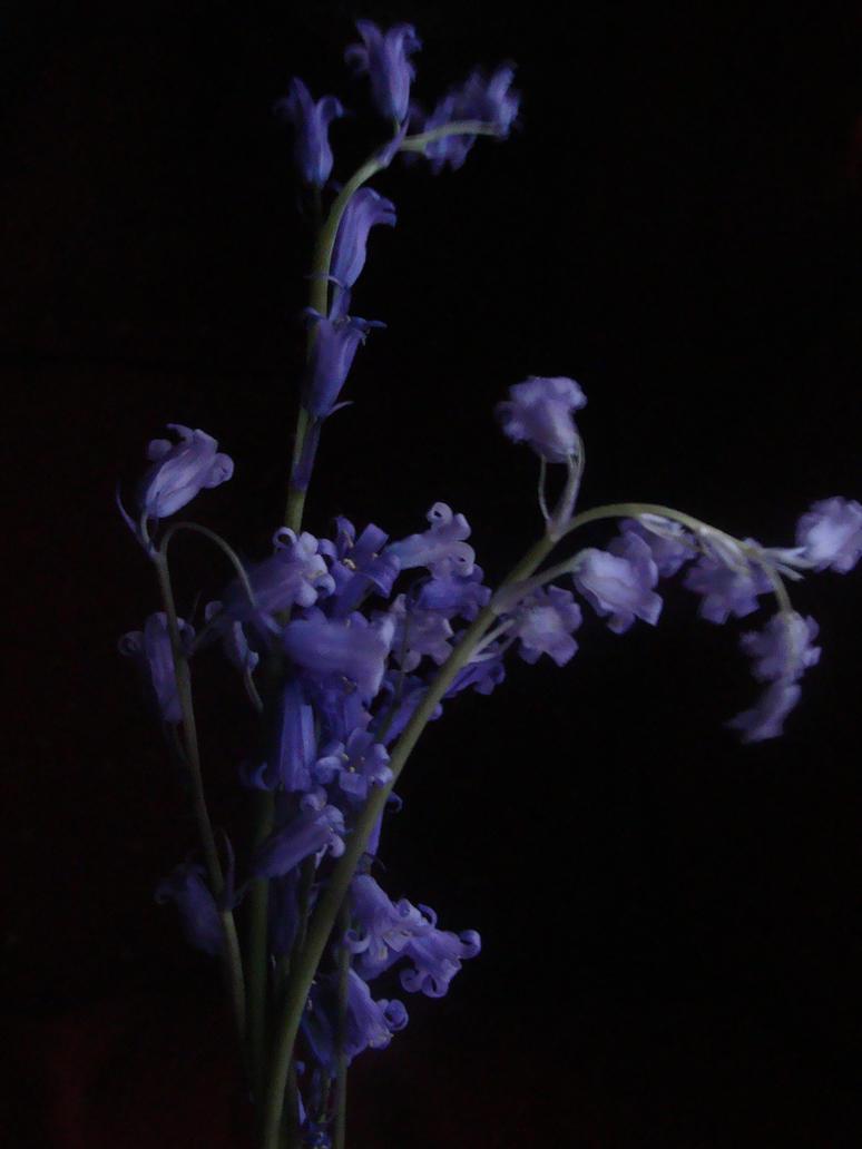 Bluebells by Irlandesaaa