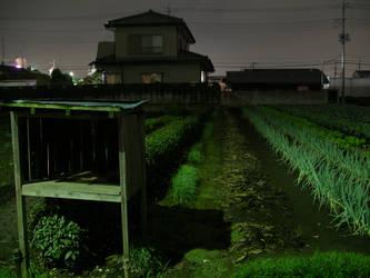 Field in Fujimi-Shi by jhf