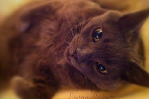 The Little Kitty by EternityBeckons
