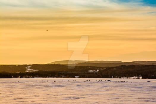 Bird on a frozen lake