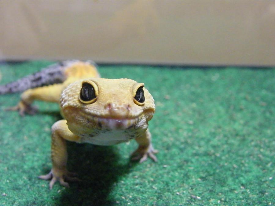 Geek the gecko by MissJane01