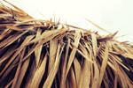 palm leaves by MissJane01