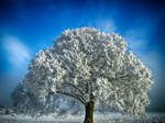Dream Of Winter