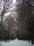 Stock Image - Wintry Forest - 14