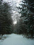 Stock Image - Wintry Forest - 13