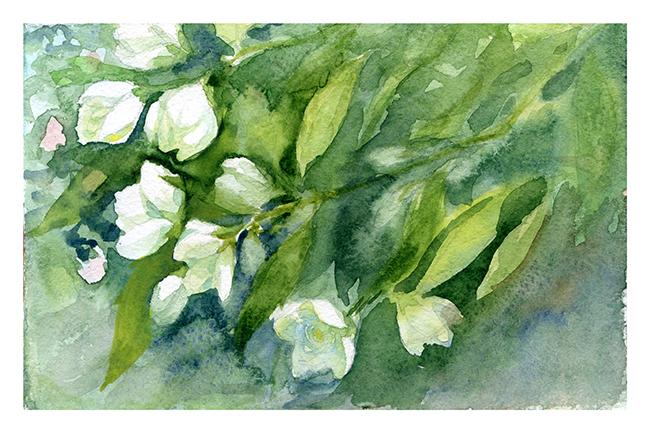 Jasmine I by XViolacea