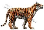Bengal Tiger study