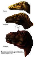 Tyrannosaurus growth series by amorousdino