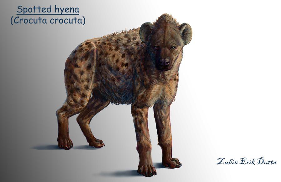 Hyena anatomy life render by amorousdino