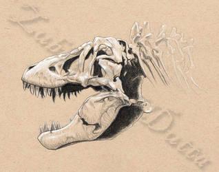 Holotype by amorousdino