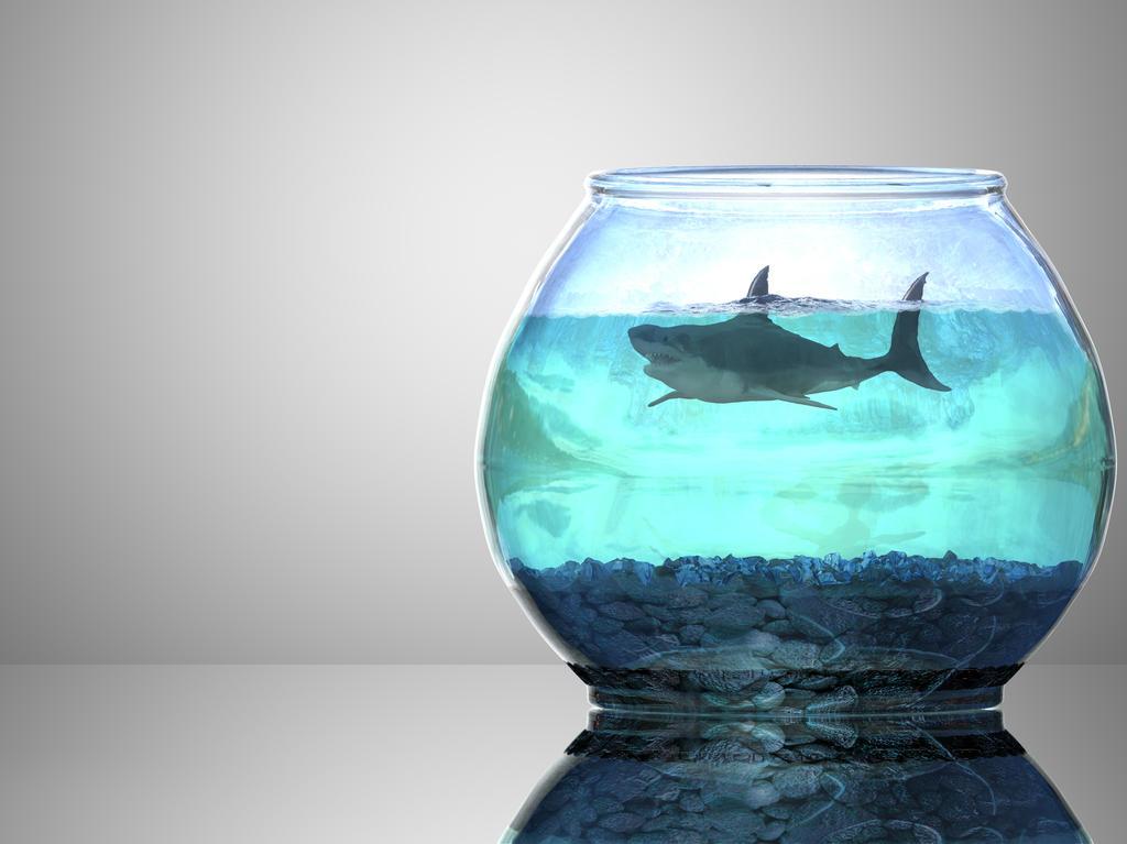 Big Fish In A Little Bowl By Vileyonderboy On Deviantart