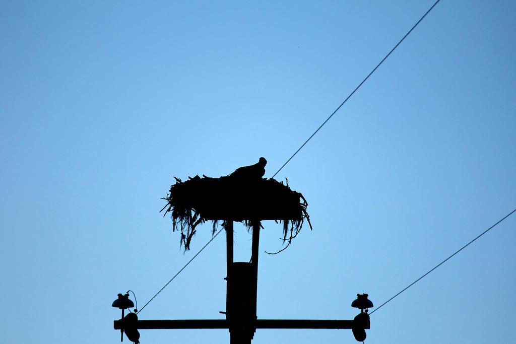 Silhouette of a Hawk by VileYonderboy