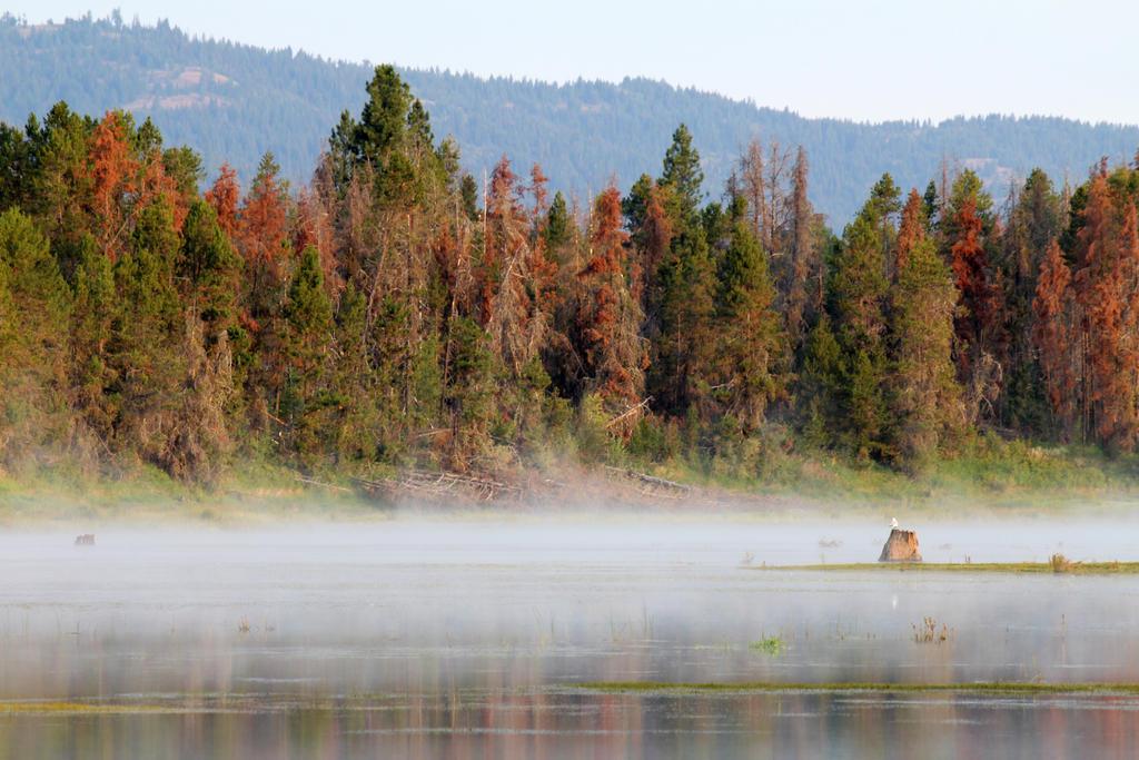 Misty morning lake by VileYonderboy