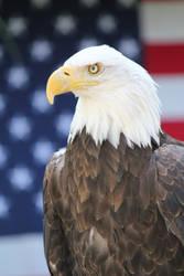 American Eagle I by VileYonderboy
