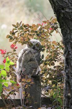 I am an Owl in Daylight