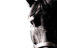 Horse by somethingstupid