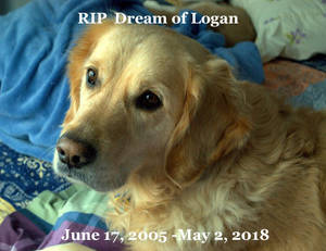RIP, Forever Puppy