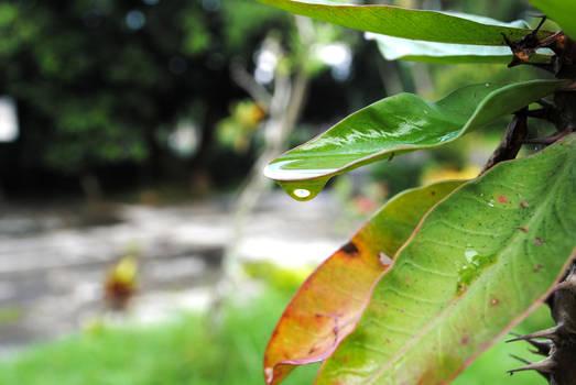 A drop of Nature