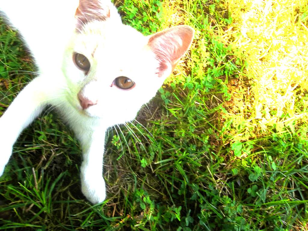 Kitten by M-Kelley