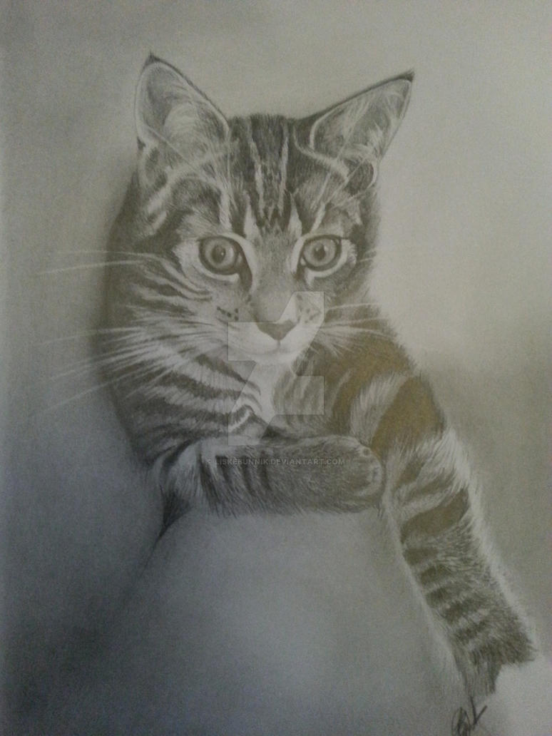 Drawing cat by LiskeBunnik