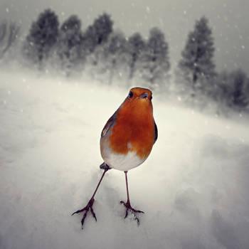 'A hard winter' by luisbeltran