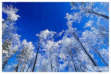 Frost by Seyan