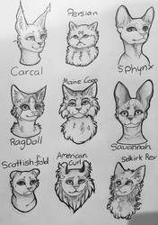 Cat breed study by Mythic-Flame