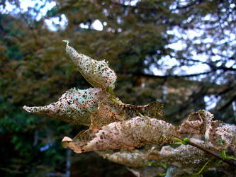 Holey Leaves 2 by SoulReaperArtemis-
